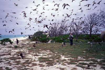 Midway Atoll in the Northwest Hawaiian Islands
